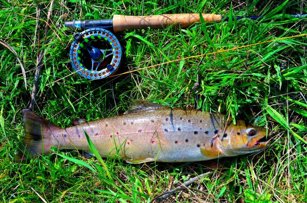 My first trout on a wet...this fish took a green wooly bugger with a lead core and bead head